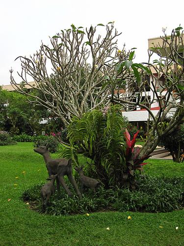 Vanda Orchid in Garden