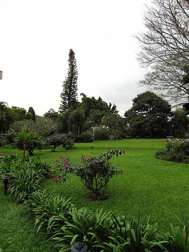 Hotel Bougainvillea Garden