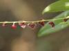 Monteverde Orchids