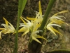 Monteverde Miniature Orchid